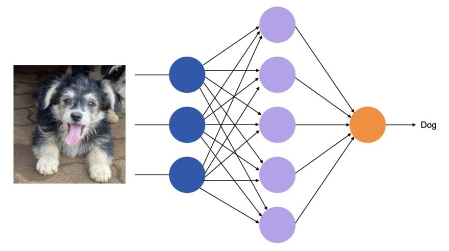 Feedforward network for image classification