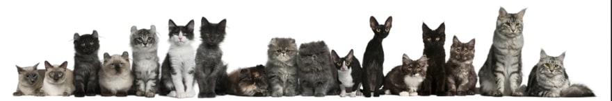 Fila de gatos