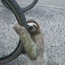 Sloth hugging a bike