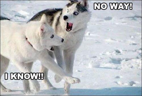 noway-iknow-huskies