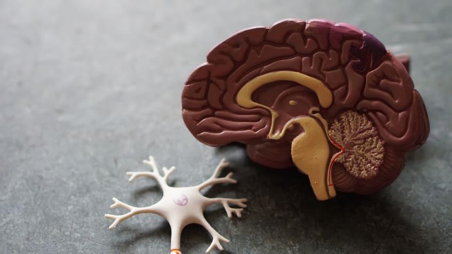 A plastic brain and neuron