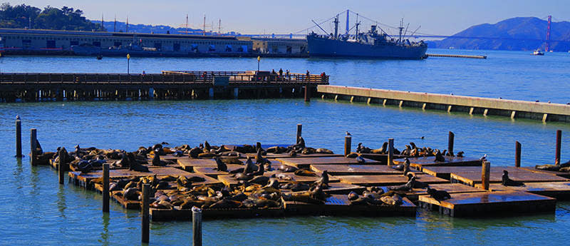 San Francisco: Sea Lions and the Golden Gate Bridge