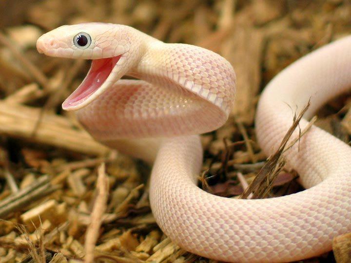 snake case image