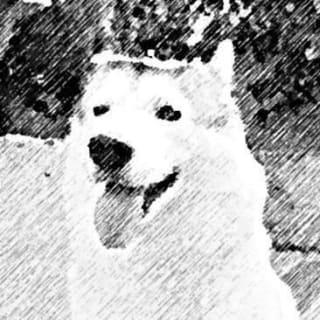 nonoyek profile picture