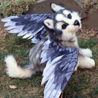 Birdo profile picture