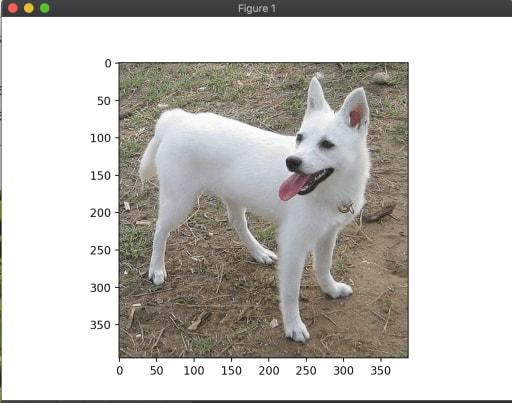 image processing dog