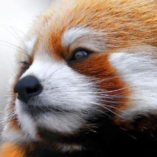 pookdeveloper profile picture