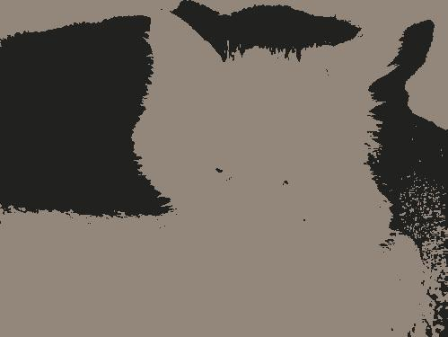 This kitten picture was compressed using K means Clustering (only 2 colors).