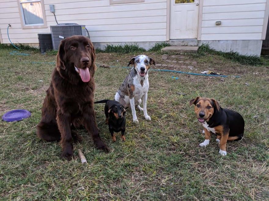 Alt pups