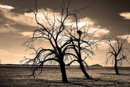 Barren Wasteland