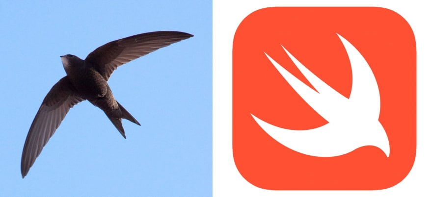The swift bird and the logo