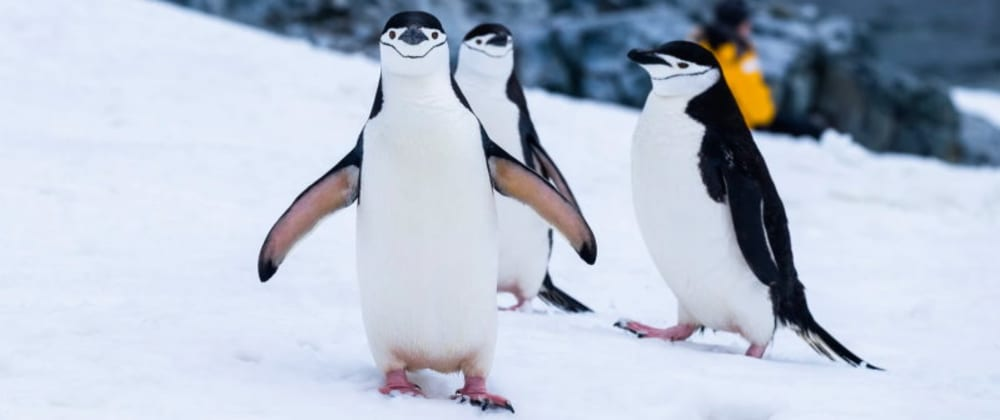 Cover image for What's the most beginner-friendly Linux distro?