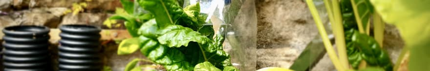 Spinach and chard growing in my DIY up-cycled vertical garden, made from used plastic bottles