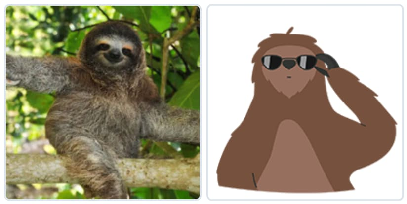 Sloth Photograph and Graphic