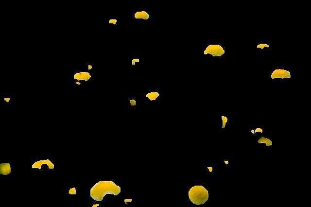 segmented-image.png