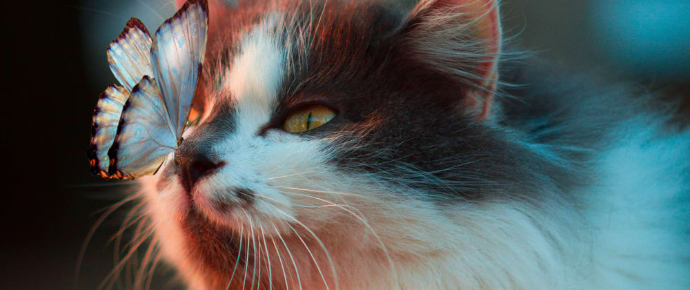 Cover image for Understanding Flexbox with Cats: Part 1 Basics