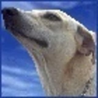 Kirit profile picture