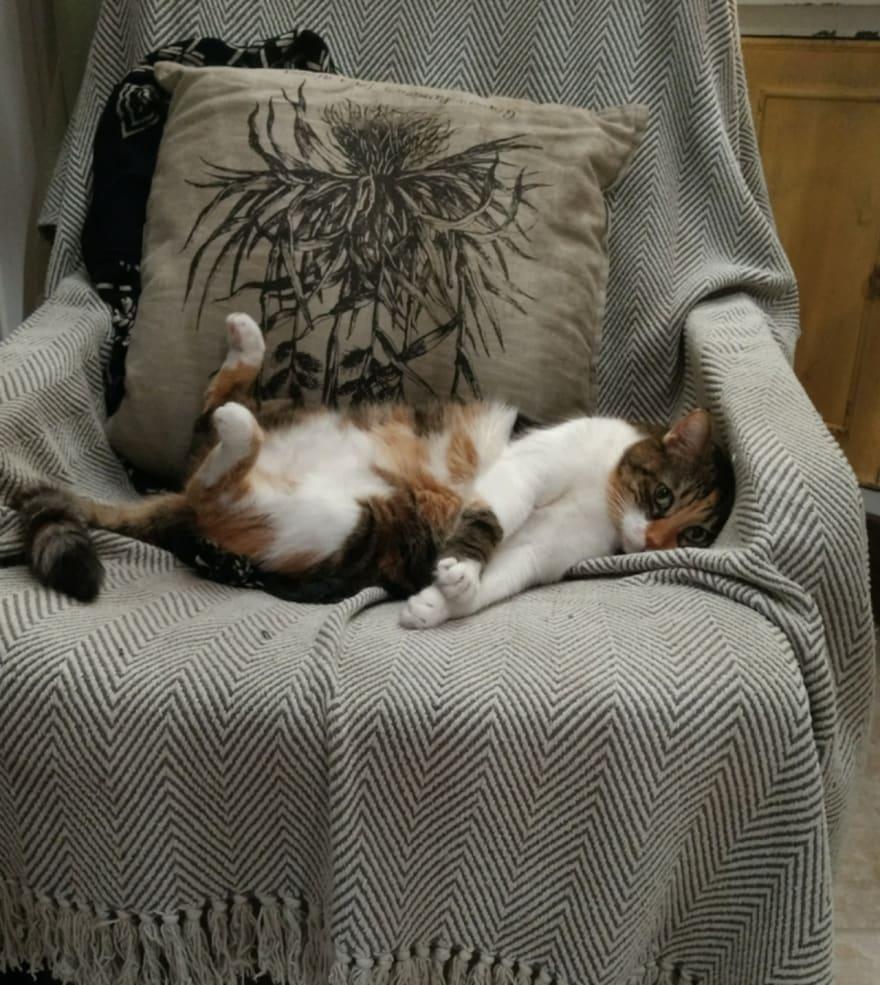Tired cat photo