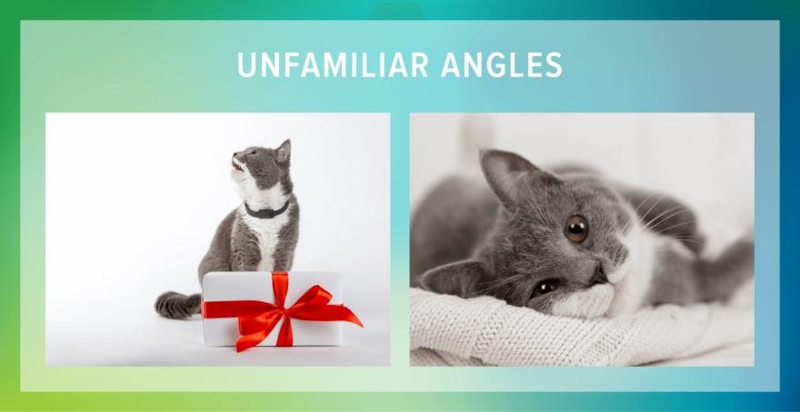 cat angles