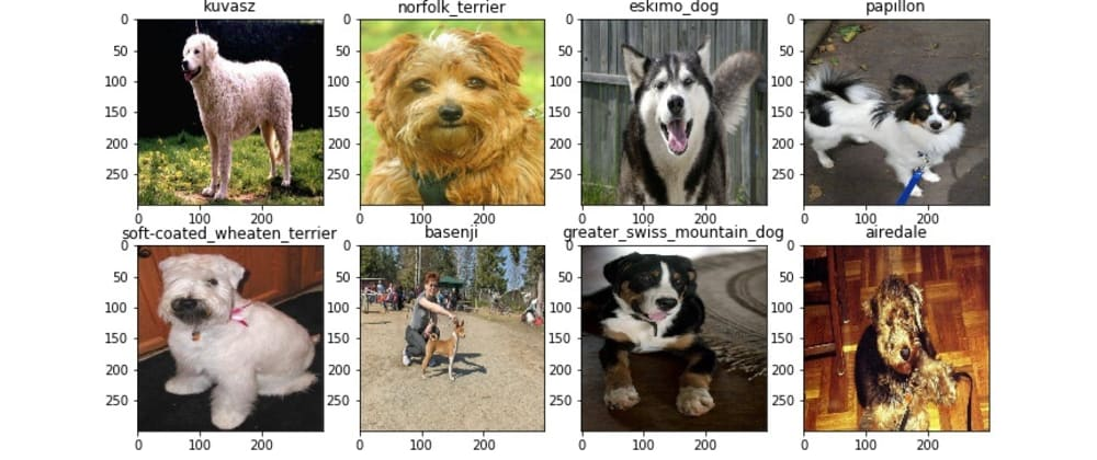 Cover image for Dog Breed Classifier Using CNN Algorithms