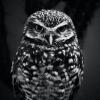 mstanciu552 profile image