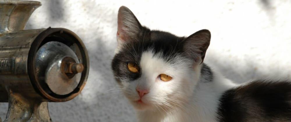 Cover image for Shrödinger's cat explains TypeScript<Generics>