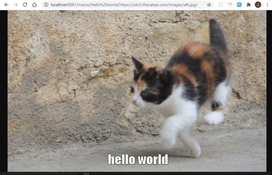hello world on a kitten