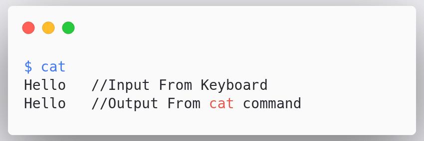 cat-normal-input