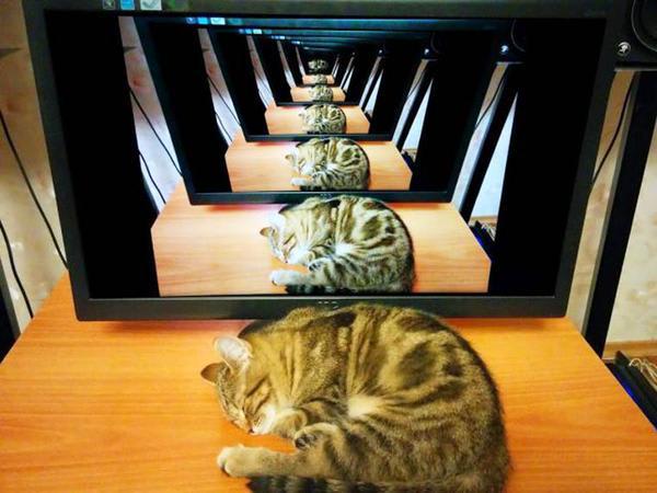 Recursive Cat