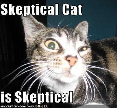 "striped cat giving skeptical look. text says ""Skeptical Cat is skeptical"""