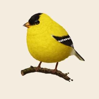 Finch profile picture