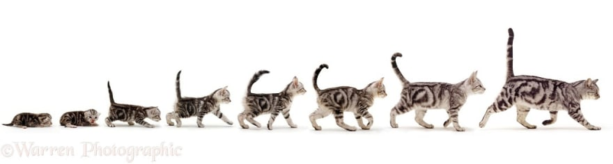 Cat stages