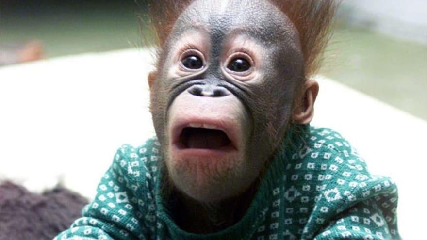 Oh No Craft Error Monkey