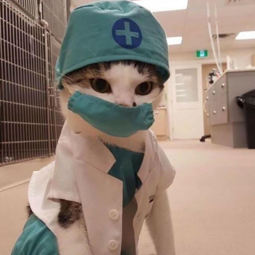 Gatinho enfermeiro