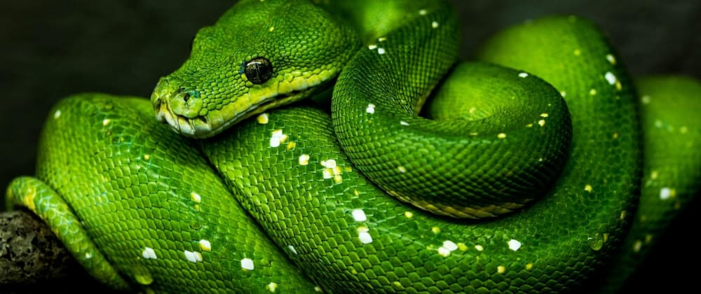 Cover image for Real World Python 🐍: Introduction
