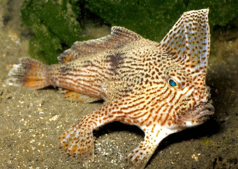 weird-fish