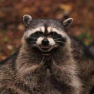 Thibaut Rousseau profile picture