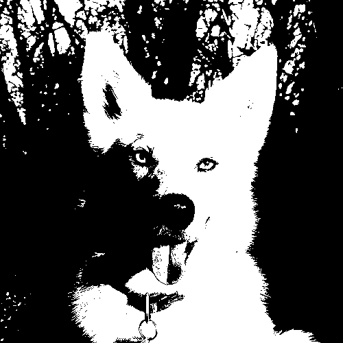 undithered black and white picture of my dog