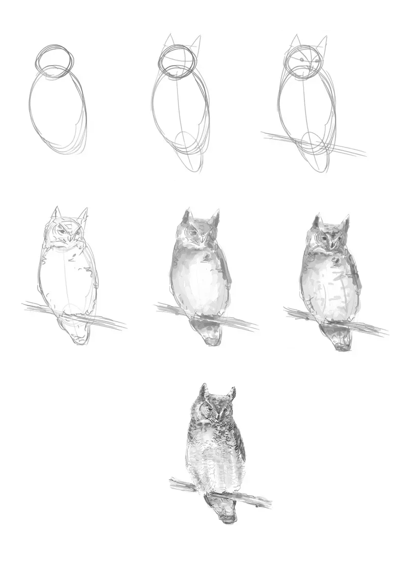 Owl with all steps
