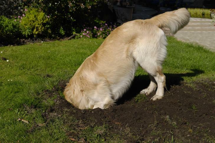 Digging a hole to find more and more problems