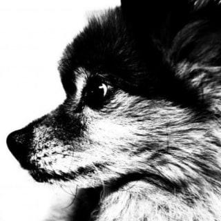 shoota profile
