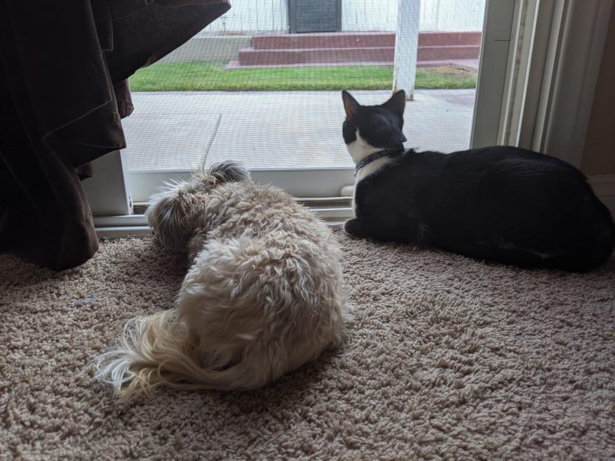 Blondie, dog, and Castiel, cat