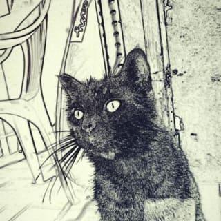 yeraycat profile