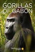 Gorillas of Gabon (2019)