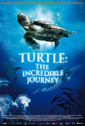 Watch Turtle: The Incredible Journey Full HD Free Online