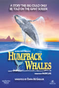 Watch Humpback Whales Full HD Free Online