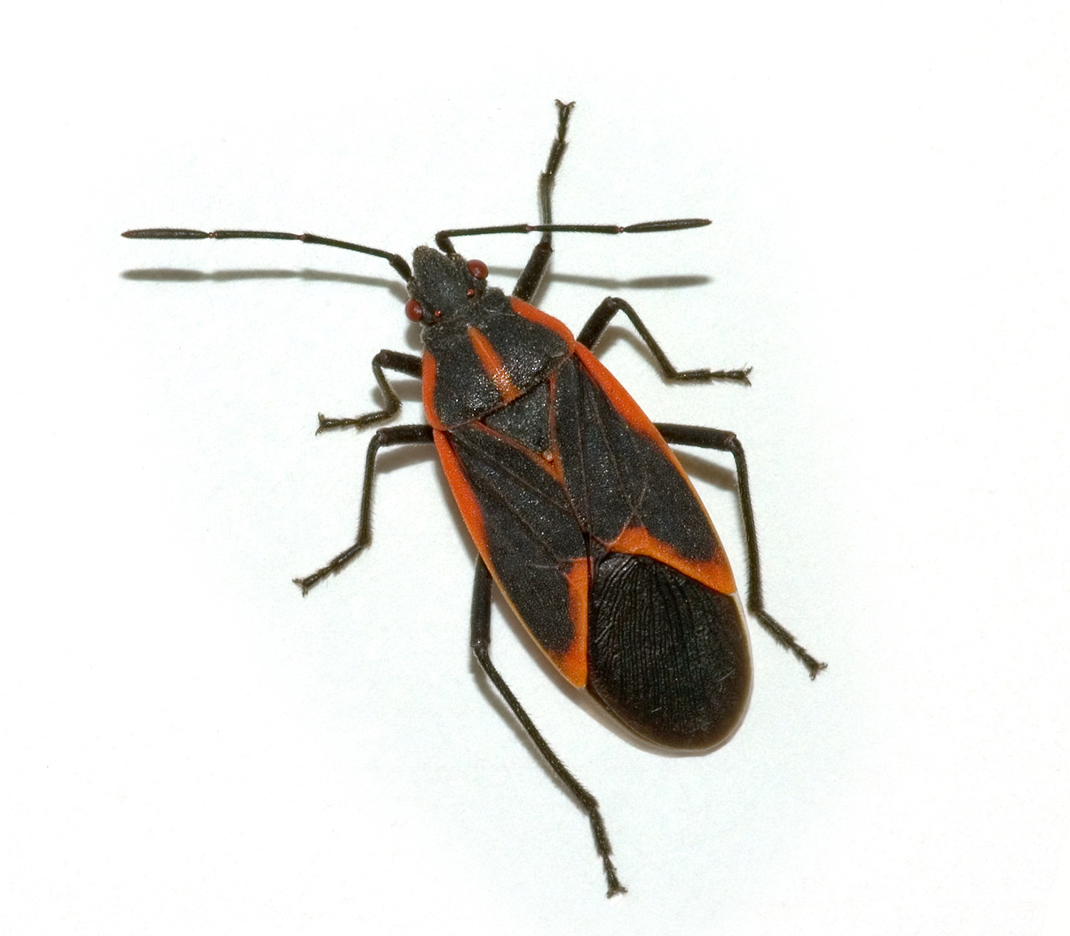 Preferred Pest Control We Re Tough On Pests