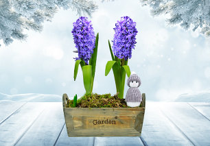 Hyacinth Duo