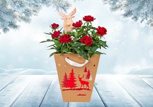 Festive Rose & Reindeer