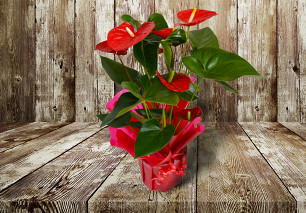 Exotic Anthurium